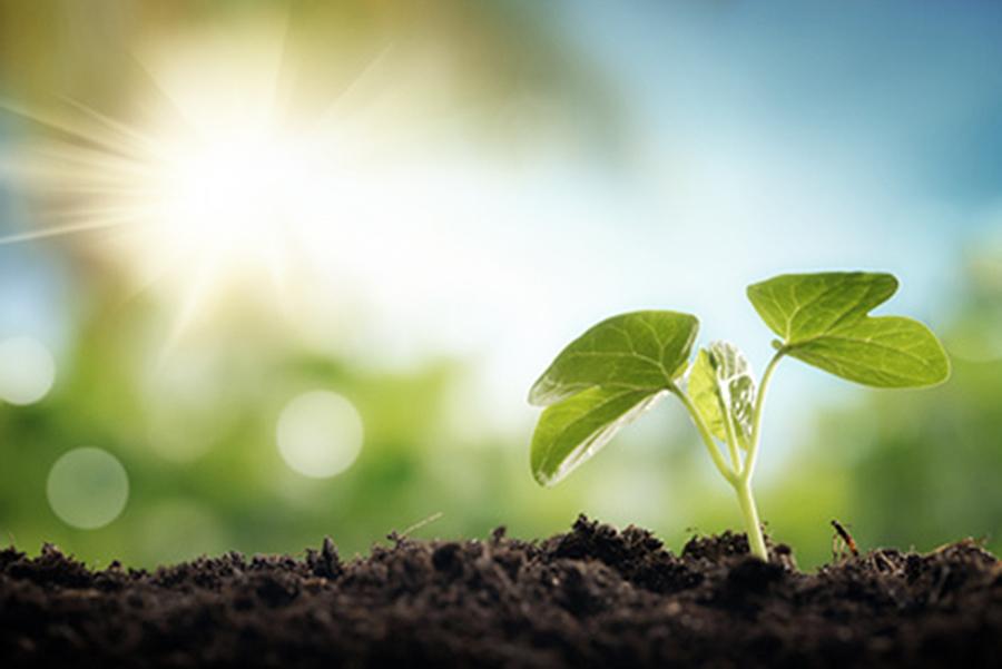 Che cos 39 l 39 agricoltura biologica for Cos e l antonomasia