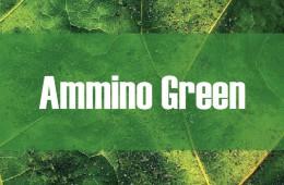 Ammino Green