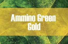 Ammino Green Gold