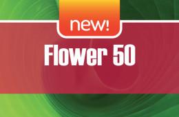 Flower 50